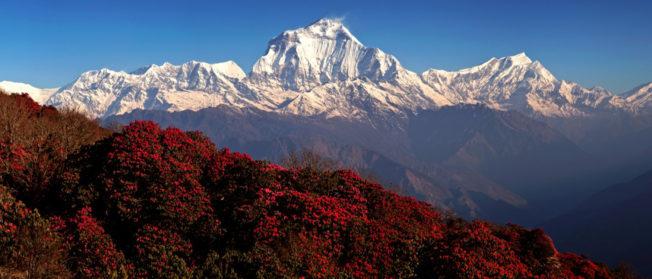 Nepal Ghorepani Poonhill Trek